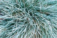 草覆盖秋天/的冬天在清早地面霜 免版税库存照片