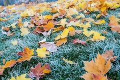 草覆盖秋天/的冬天在清早地面霜 库存照片