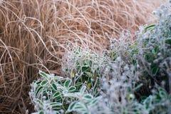 草覆盖秋天/的冬天在清早地面霜 库存图片