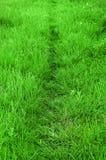 草路径通过 免版税库存照片