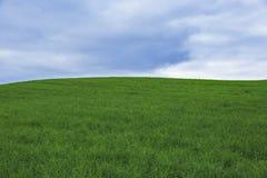 绿草辗压小山 库存图片