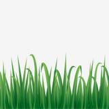 绿草边界有白色背景 库存图片