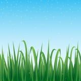 绿草边界有闪耀的蓝天背景 免版税库存照片