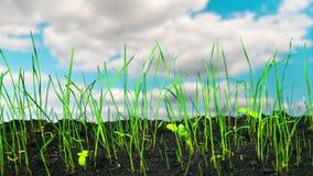 草迅速增长,定期流逝 影视素材