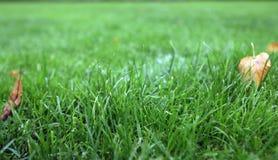 草迷离在庭院里 免版税库存图片