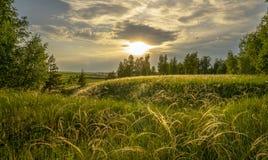 草针茅在根据落日的草甸在桦树树丛的背景 库存照片