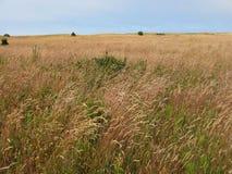 草长的草甸 图库摄影