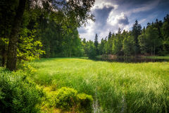 草长满的池塘 免版税图库摄影