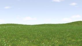 绿草领域和明亮的蓝天的图象 免版税库存照片
