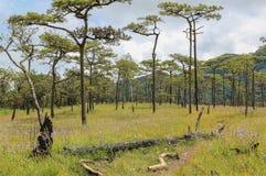 绿草领域和杉树与多云天空 免版税库存照片