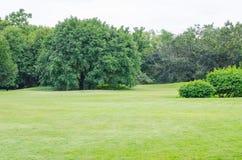 绿草领域和绿色新鲜的树 免版税图库摄影