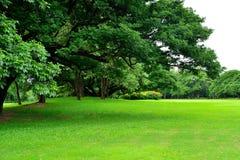 绿草领域在公园 免版税库存图片