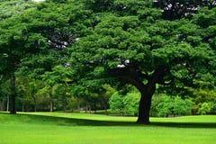 绿草领域在公园 免版税库存照片