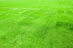 绿草领域 免版税库存照片