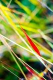 草颜色在秋天。自然背景。 图库摄影