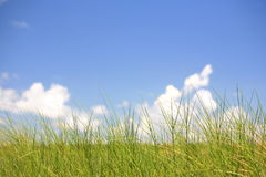 草风景2 库存图片