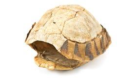 草龟乌龟壳 免版税库存图片