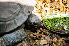 草龟在曼谷 库存图片