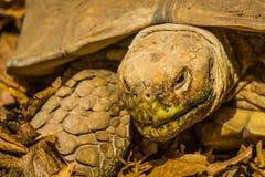 草龟在曼谷 免版税库存图片