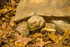 草龟在曼谷 免版税库存照片