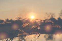 草,太阳,背景,领域,天空,自然,夏天,晴朗,火光 库存图片