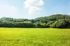 草,树, cloudscape 库存照片