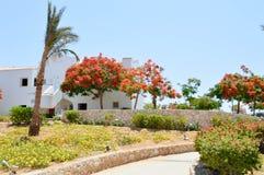 草,植被,与红色开花的花的Delonix皇家树,与绿色的棕榈树在一种热带手段离开反对蓝色s 免版税库存照片