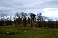 草,自然,在词苏格兰 免版税库存照片