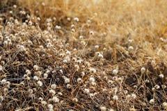 草,花草干草干燥为背景选择聚焦 库存图片