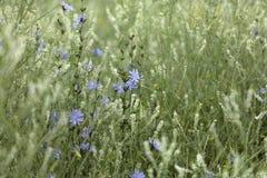 草,蓝色和白花抽象背景  大号,高分辨率,被弄脏的背景 库存图片