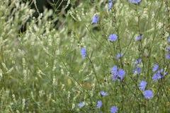 草,蓝色和白花抽象背景  大号,高分辨率,被弄脏的背景 免版税库存照片
