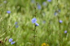 草,蓝色花抽象背景  大号,高分辨率,被弄脏的背景 库存照片