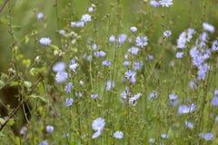 草,蓝色花抽象背景  大号,高分辨率,被弄脏的背景 免版税库存照片