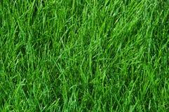 绿草,被设色的绿色草坪  免版税库存照片