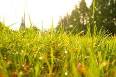 绿草,水滴下,早晨,公园 免版税库存图片