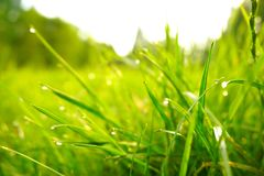 绿草,水滴下,早晨,公园 库存图片