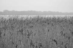 草,黑白的湖,冬天 免版税库存图片