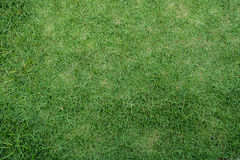 绿草围场背景 免版税库存图片