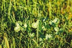 草 抽象背景本质 库存图片