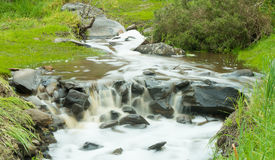 绿草围拢的含水小河 免版税库存照片