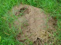 草围拢的蚁丘 免版税库存图片