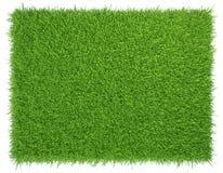 绿草 自然本底纹理 新鲜 库存照片