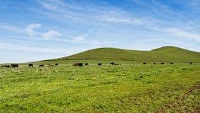 草以仅绿色在冬天 库存照片