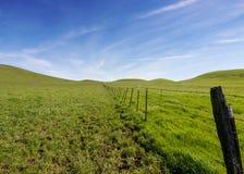 草以仅绿色在冬天 免版税库存图片