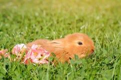 草绿色小的兔子 免版税图库摄影
