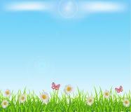 草绿色草坪 免版税库存照片