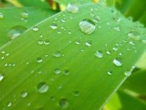 草绿色雨珠 免版税库存照片