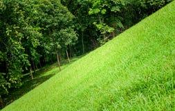 草绿色结构树 图库摄影