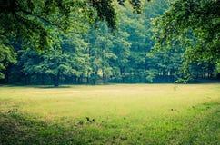 草绿色结构树 库存照片