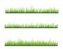 草 向量例证